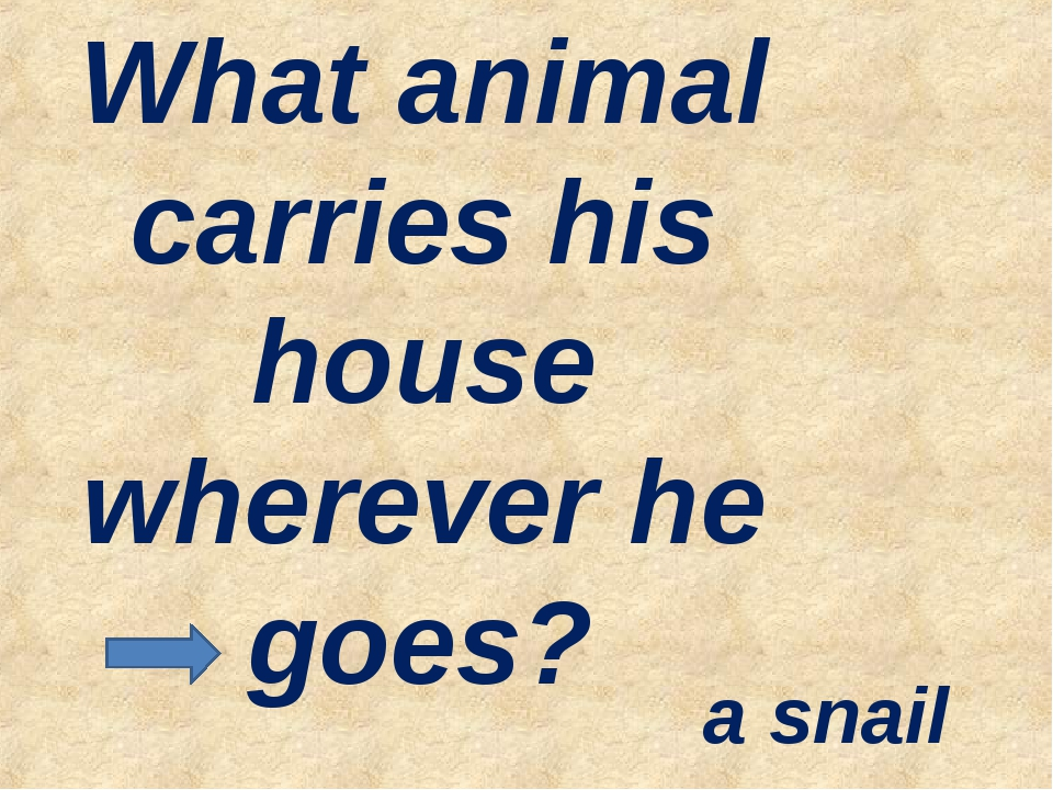 What animal carries his house wherever he goes? a snail