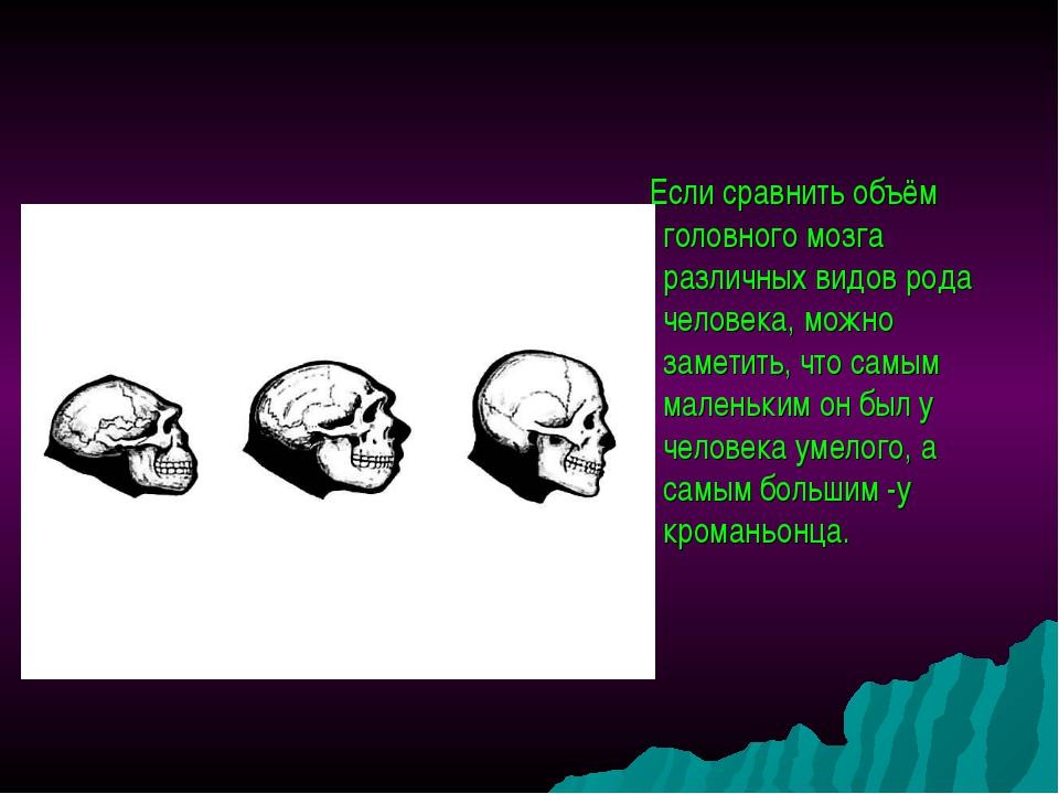 Если сравнить объём головного мозга различных видов рода человека, можно зам...