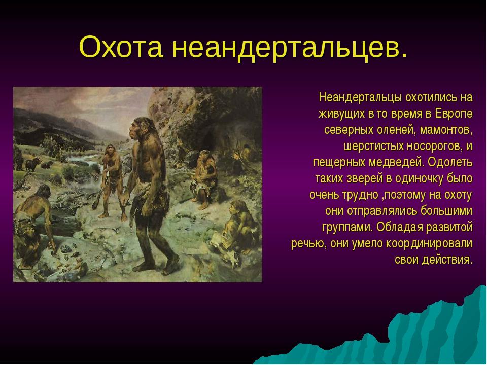 Охота неандертальцев. Неандертальцы охотились на живущих в то время в Европе...