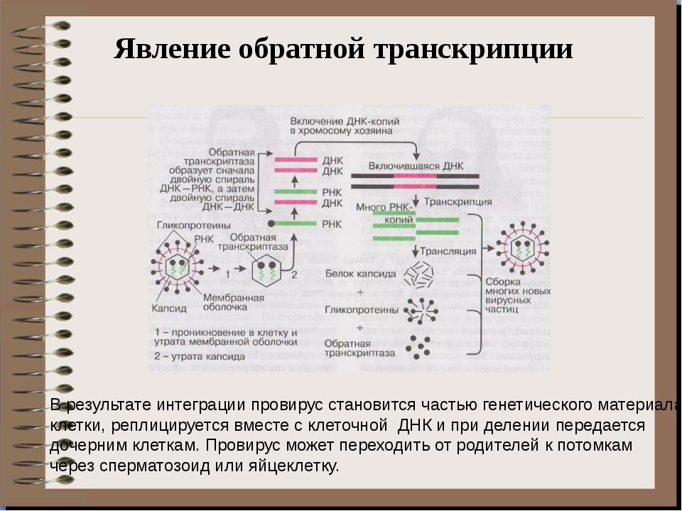Явление обратной транскрипции В результате интеграции провирус становится час...