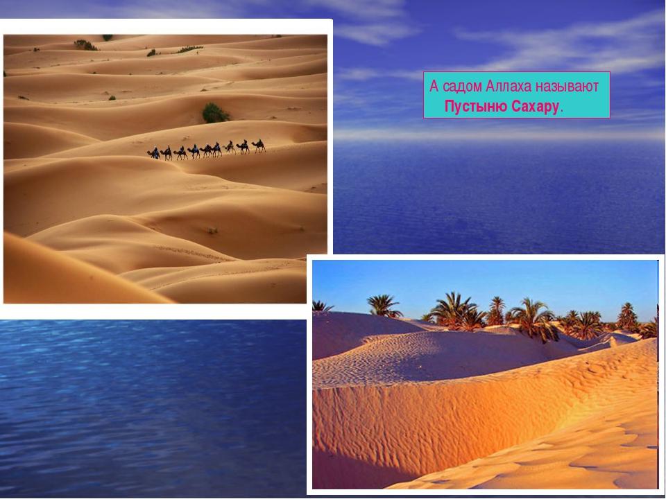 А садом Аллаха называют Пустыню Сахару.