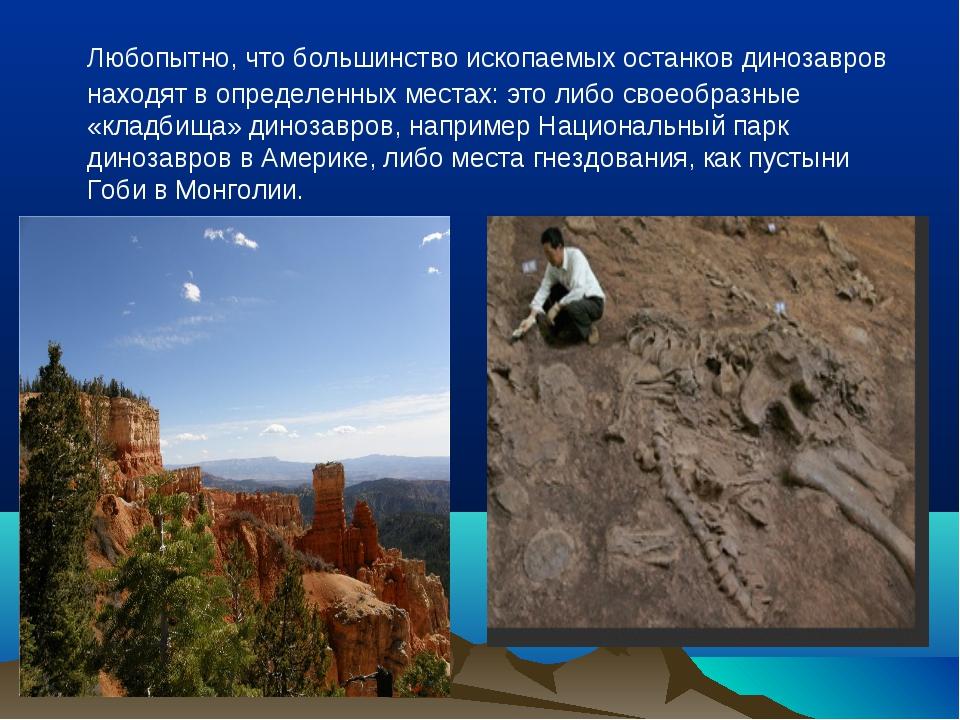 Любопытно, что большинство ископаемых останков динозавров находят в определе...