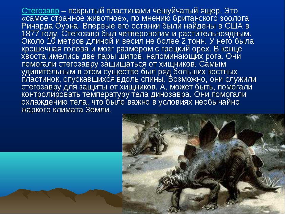 Стегозавр – покрытый пластинами чешуйчатый ящер. Это «самое странное животно...