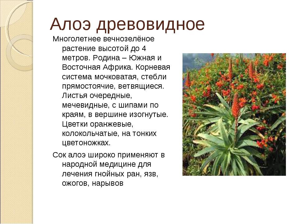 Алоэ древовидное Многолетнее вечнозелёное растение высотой до 4 метров. Родин...