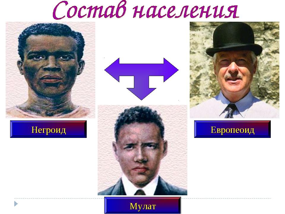 Негроид Европеоид Мулат