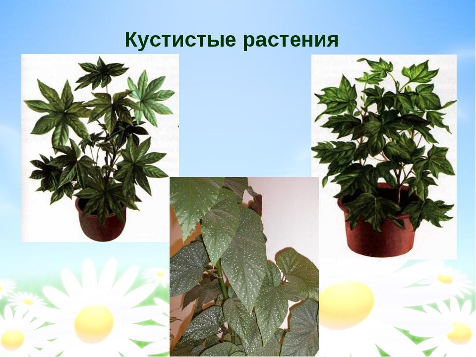 Кустистые растения