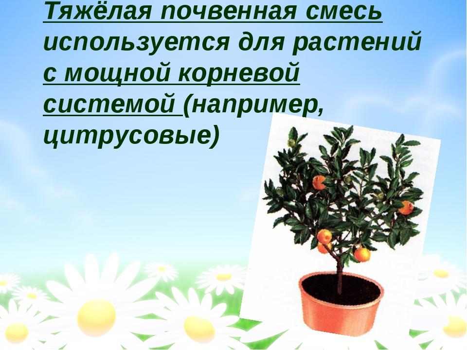 Тяжёлая почвенная смесь используется для растений с мощной корневой системой...