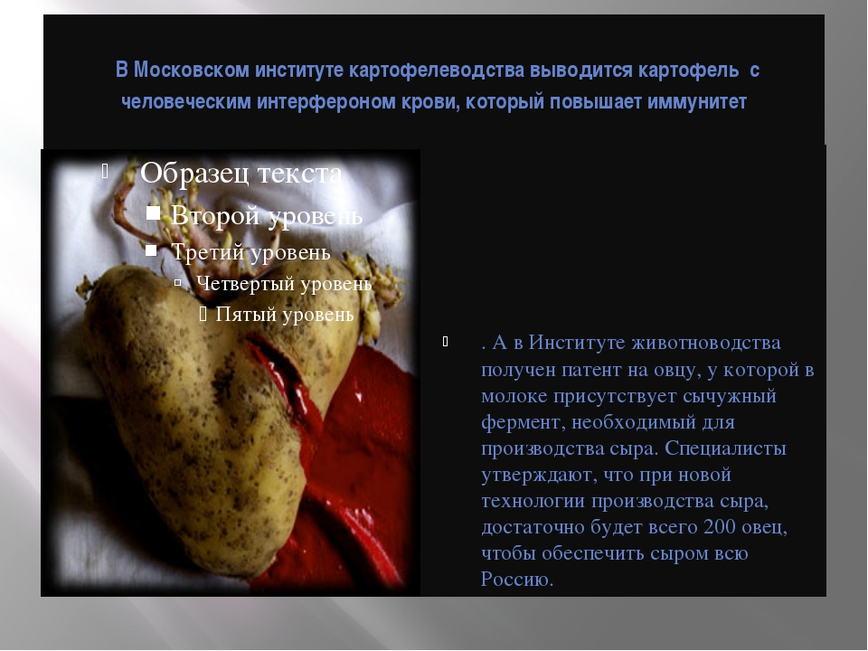 В Московском институте картофелеводства выводится картофель с человеческим и...