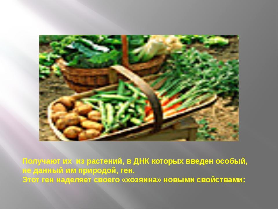 Получают их из растений, в ДНК которых введен особый, не данный им природой,...