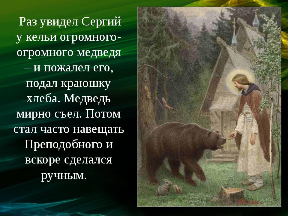 Раз увидел Сергий у кельи огромного-огромного медведя – и пожалел его, подал...