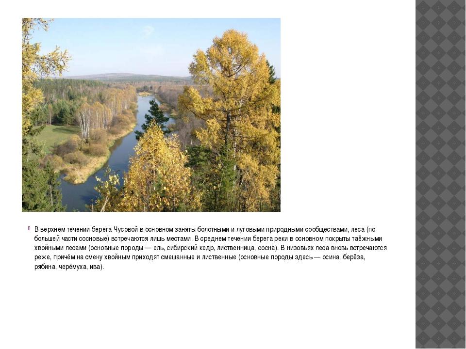В верхнем течении берега Чусовой в основном заняты болотными и луговыми приро...