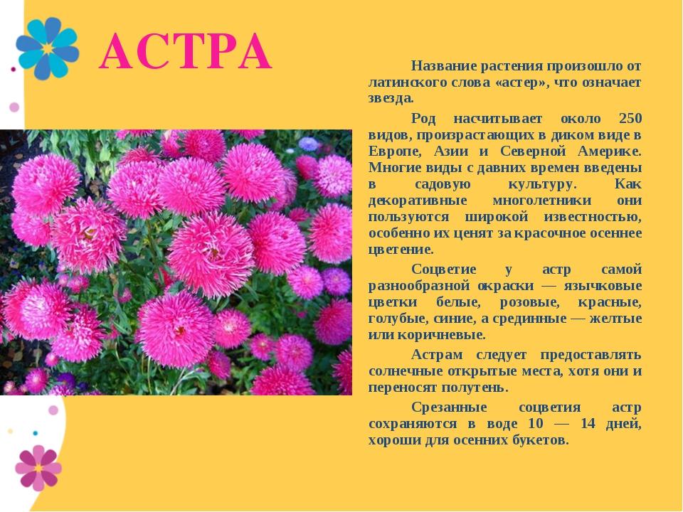 АСТРА Название растения произошло от латинского слова «астер», что означает...