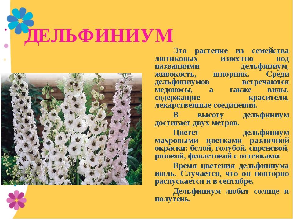 ДЕЛЬФИНИУМ Это растение из семейства лютиковых известно под названиями дель...