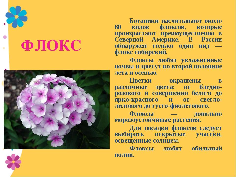ФЛОКС Ботаники насчитывают около 60 видов флоксов, которые произрастают пре...