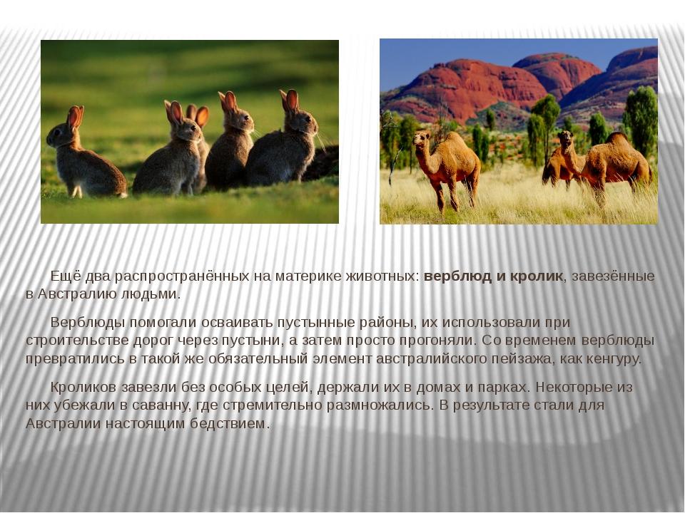 Ещё два распространённых на материке животных: верблюд и кролик, завезённые...