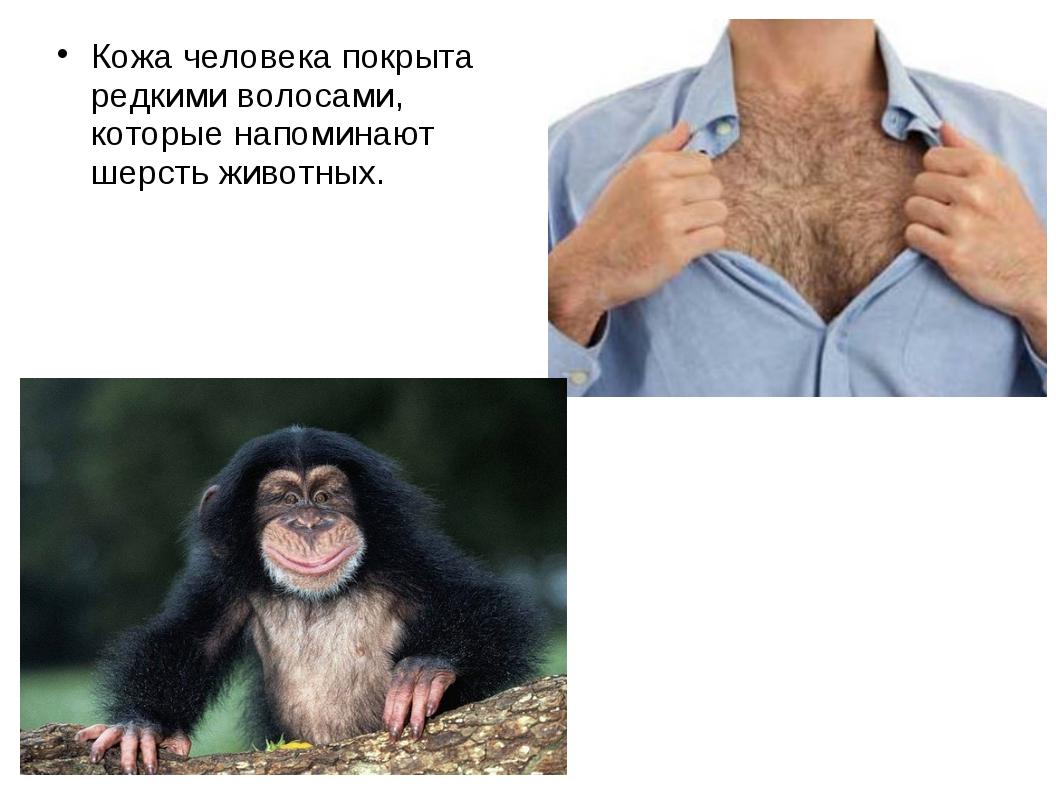 Кожа человека покрыта редкими волосами, которые напоминают шерсть животных.