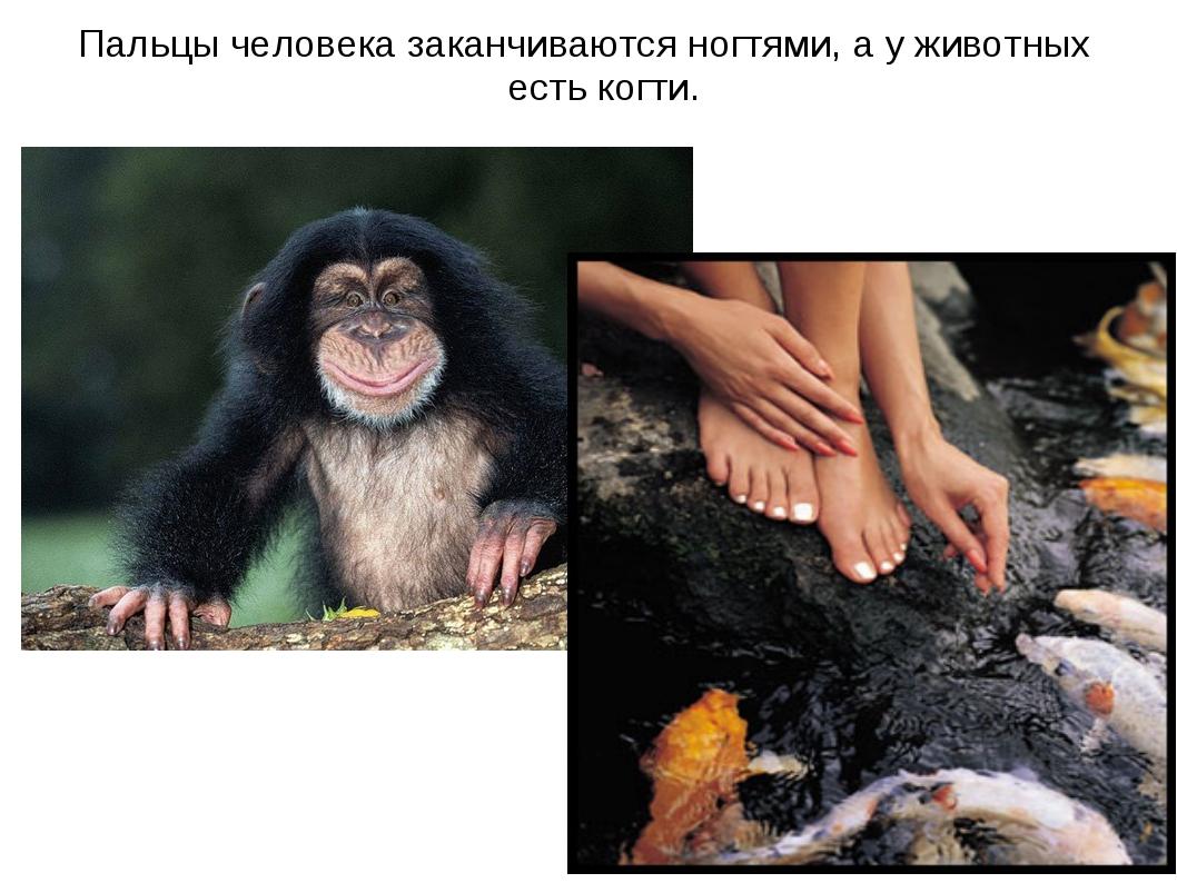 Пальцы человека заканчиваются ногтями, а у животных есть когти.