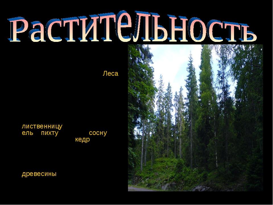 Площадь лесного фонда Красноярского края составляет 168,1млн га. Леса покры...