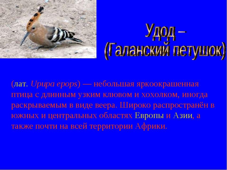 (лат.Upupa epops)— небольшая яркоокрашенная птица с длинным узким клювом и...