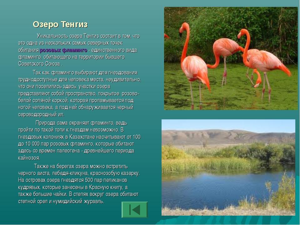 Озеро Тенгиз Уникальность озера Тенгиз состоит в том, что это одна из несколь...