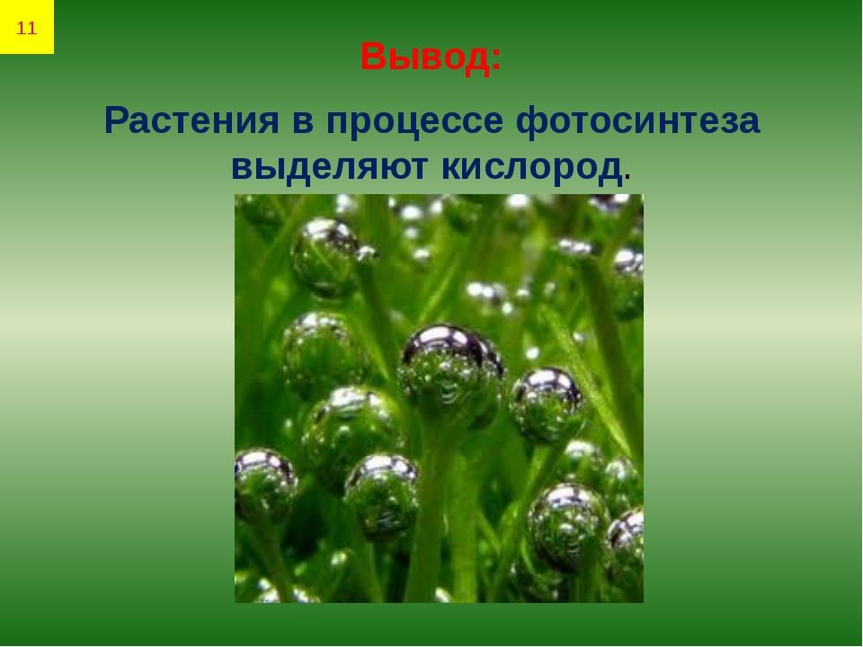 Вывод: Растения в процессе фотосинтеза выделяют кислород. 11