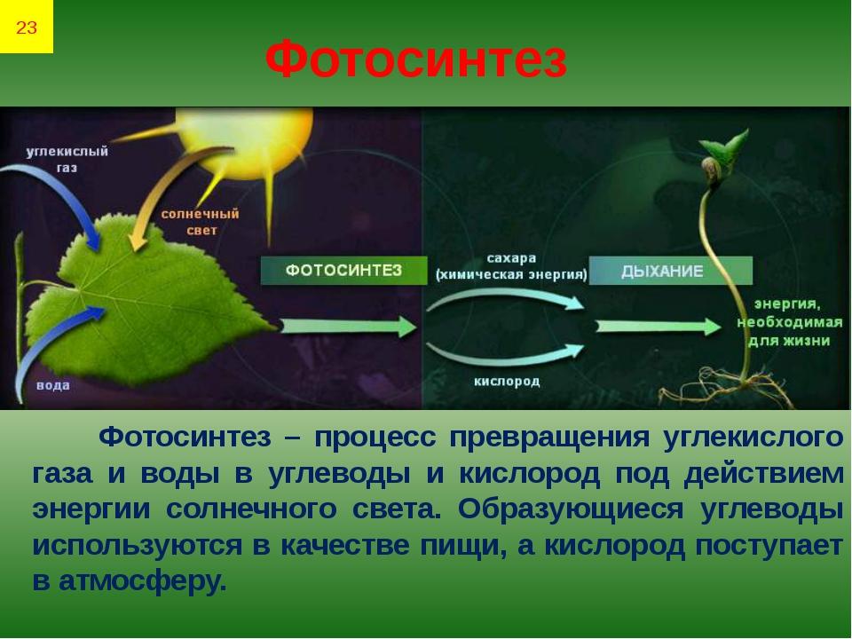 Фотосинтез Фотосинтез – процесс превращения углекислого газа и воды в углевод...