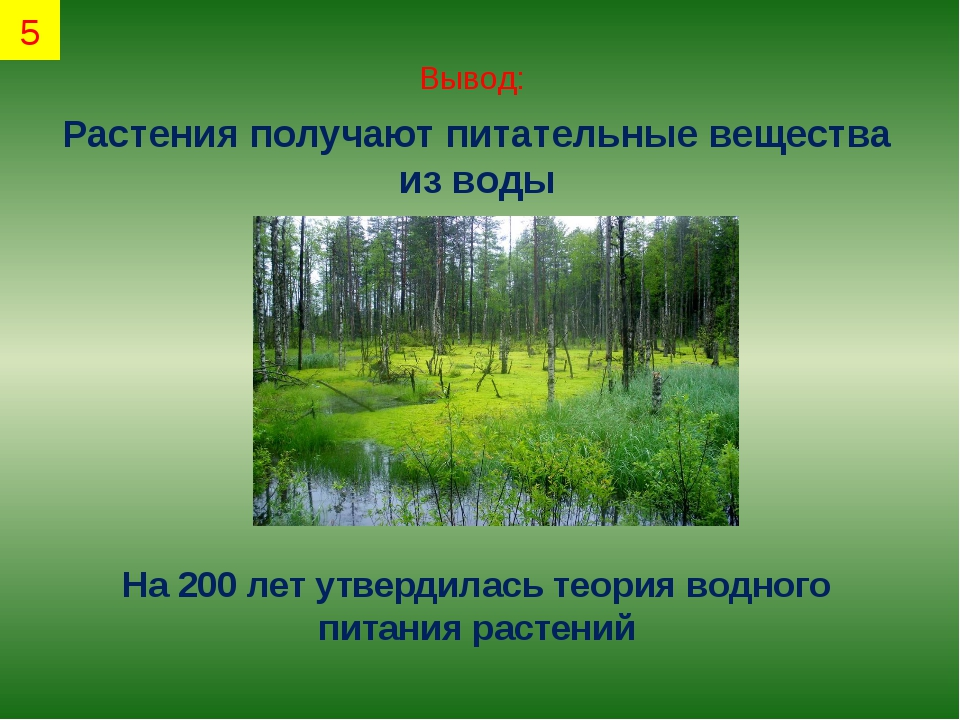 Вывод: Растения получают питательные вещества из воды На 200 лет утвердилась...