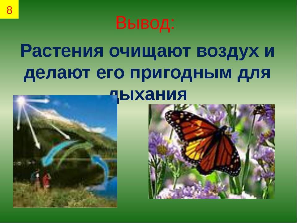 Вывод: Растения очищают воздух и делают его пригодным для дыхания 8