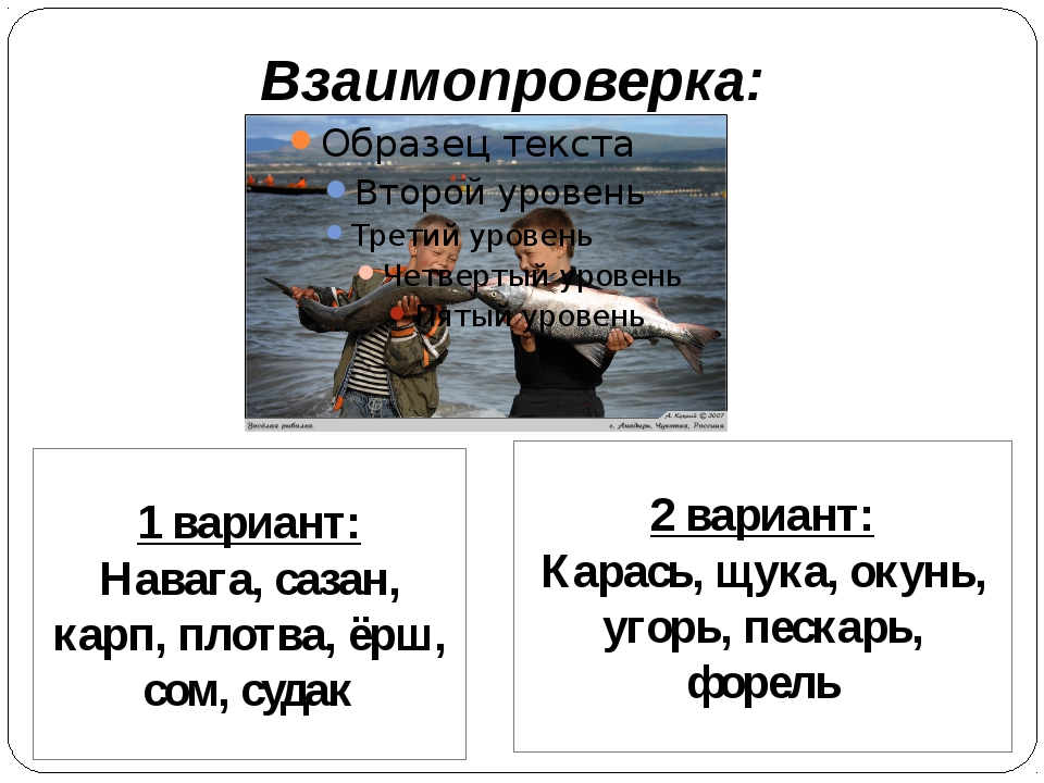 Взаимопроверка: 1 вариант: Навага, сазан, карп, плотва, ёрш, сом, судак 2 вар...