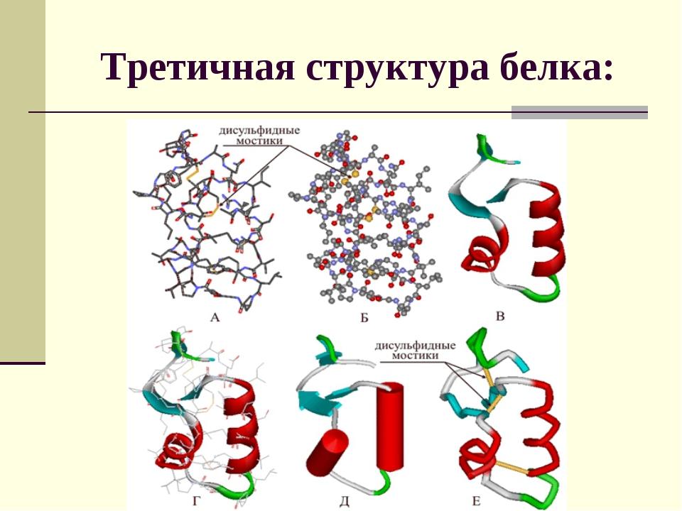 Третичная структура белка: