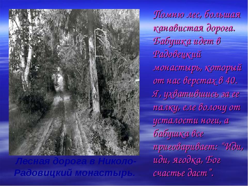 Помню лес, большая канавистая дорога. Бабушка идет в Радовецкий монастырь, к...