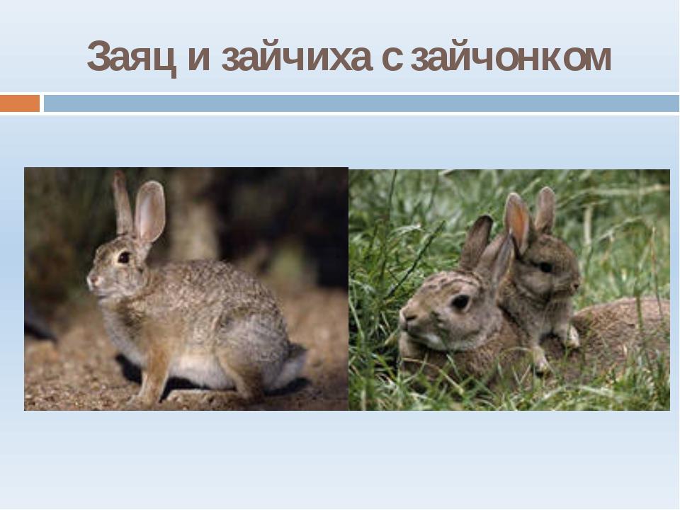 Заяц и зайчиха с зайчонком