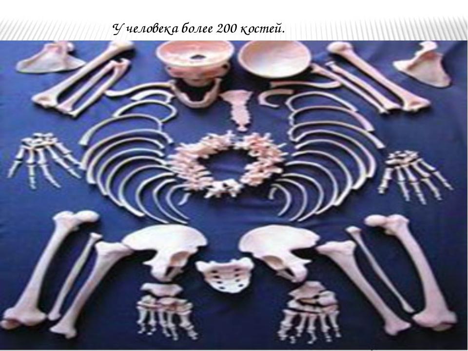 У человека более 200 костей.