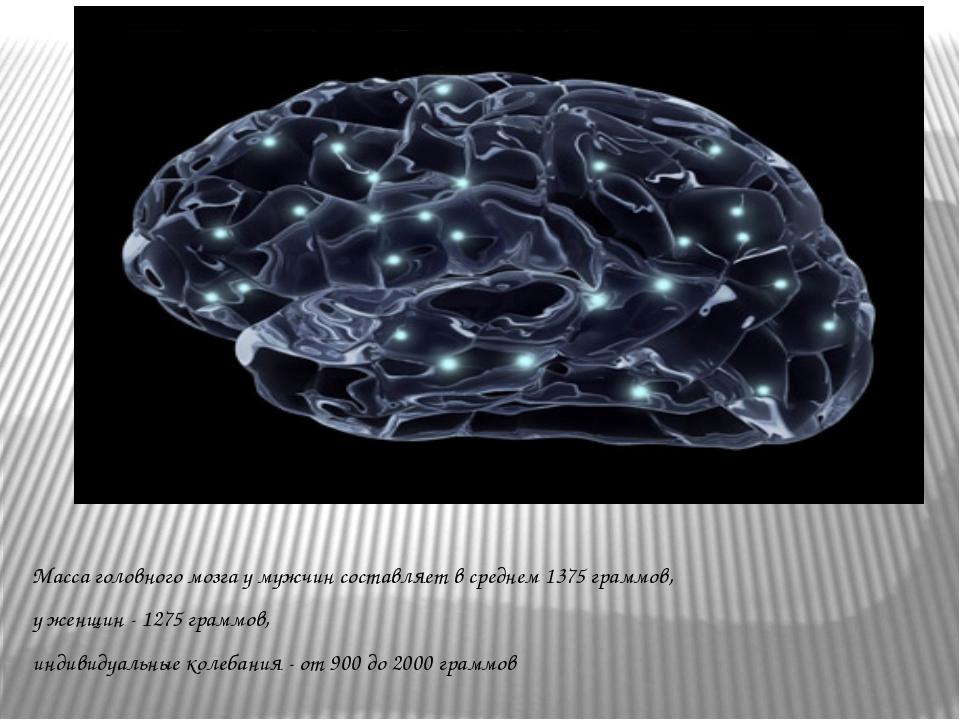 Масса головного мозга у мужчин составляет в среднем 1375 граммов, у женщин -...