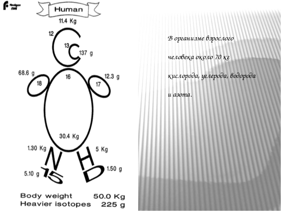 В организме взрослого человека около 70 кг кислорода, углерода, водорода и аз...