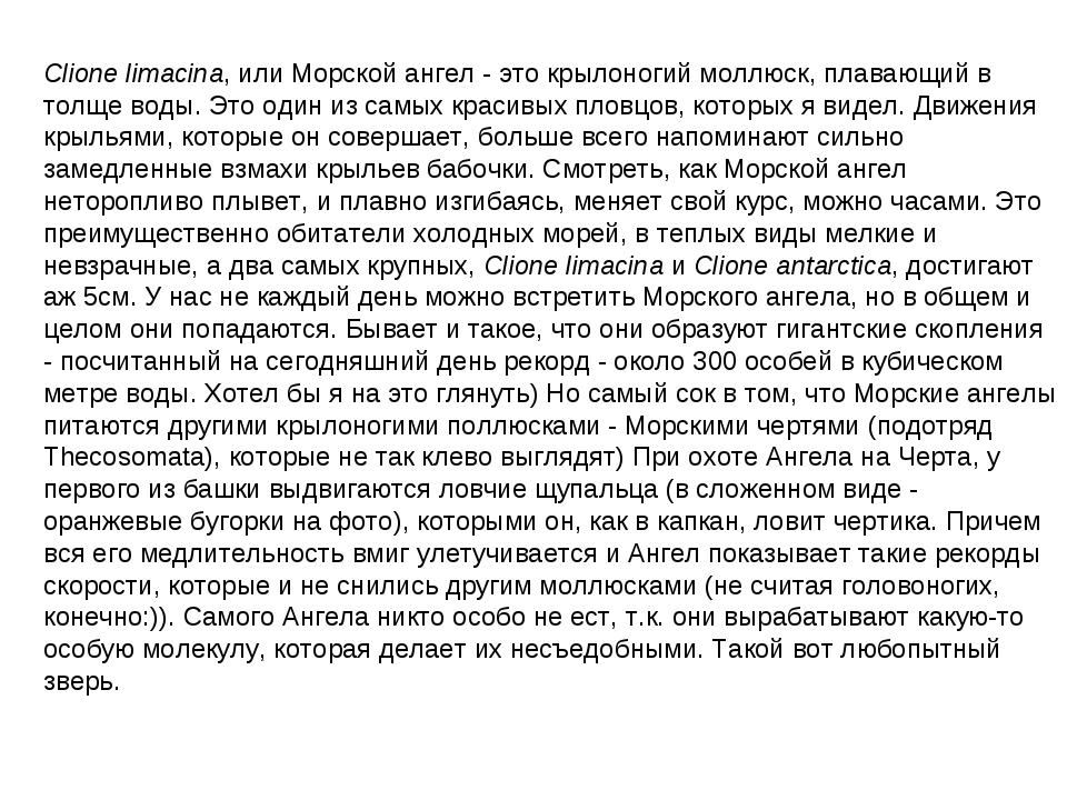 Clione limacina, или Морской ангел - это крылоногий моллюск, плавающий в толщ...