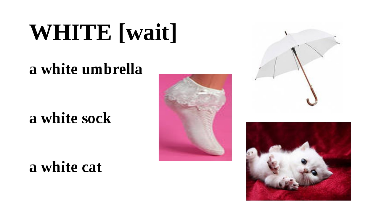 WHITE [wait] a white umbrella a white sock a white cat