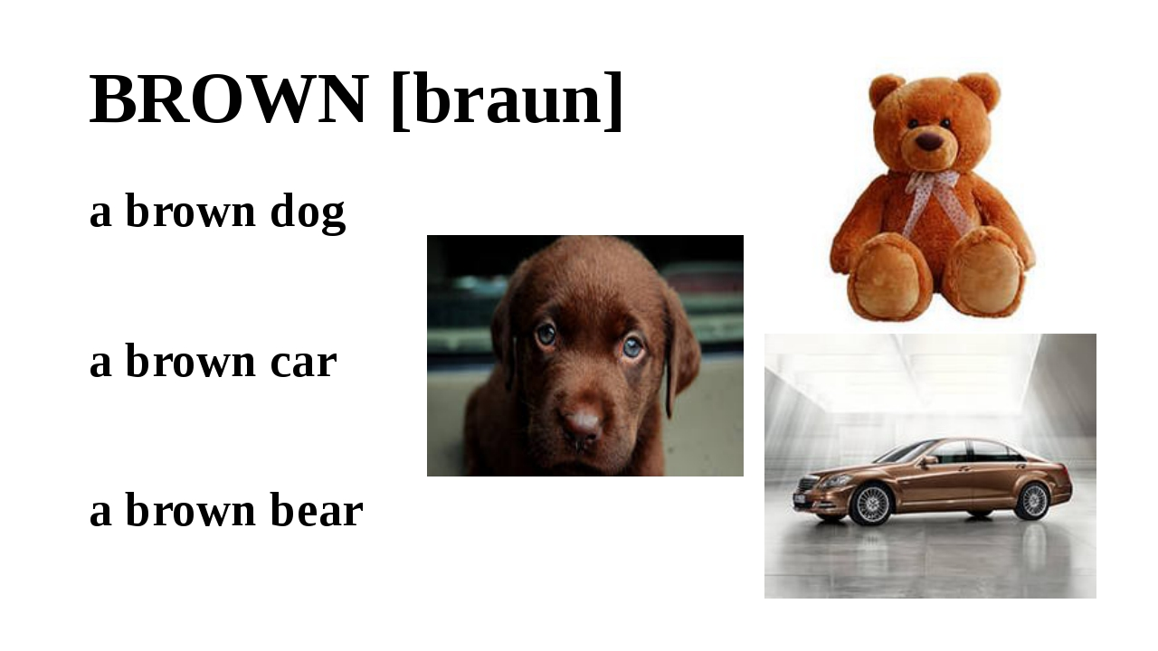 BROWN [braun] a brown dog a brown car a brown bear