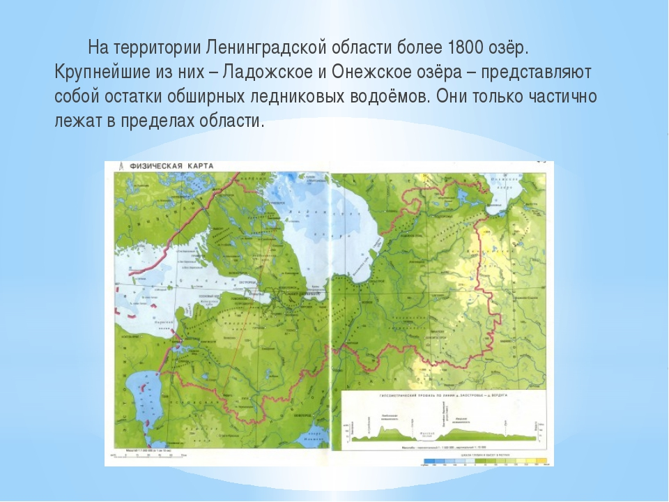 На территории Ленинградской области более 1800 озёр. Крупнейшие из них – Лад...
