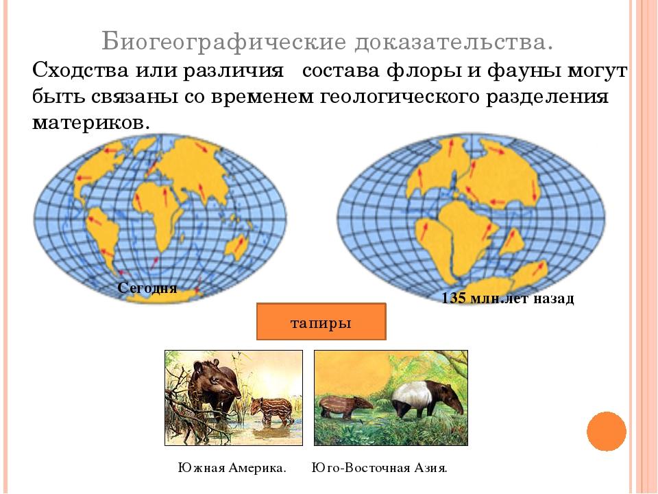 Сегодня 135 млн.лет назад Биогеографические доказательства. Сходства или разл...