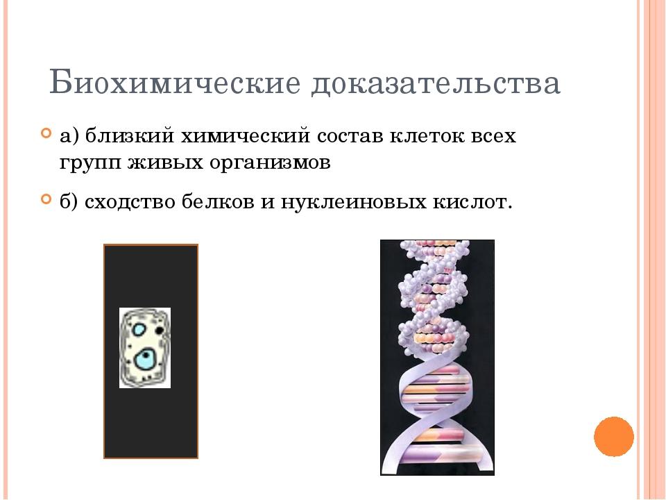 Биохимические доказательства а) близкий химический состав клеток всех групп ж...