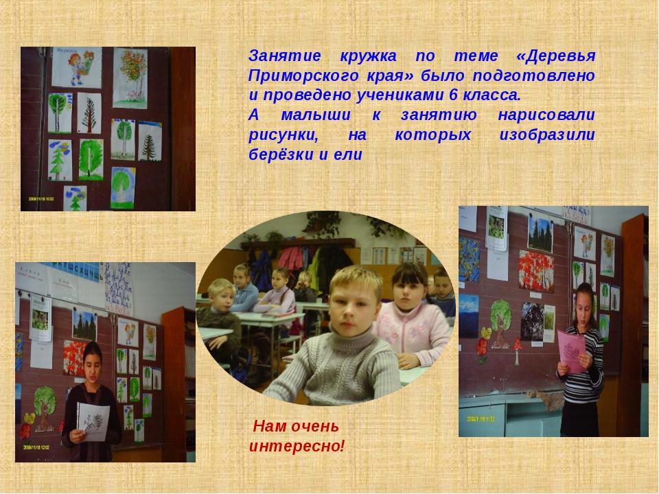 Занятие кружка по теме «Деревья Приморского края» было подготовлено и проведе...