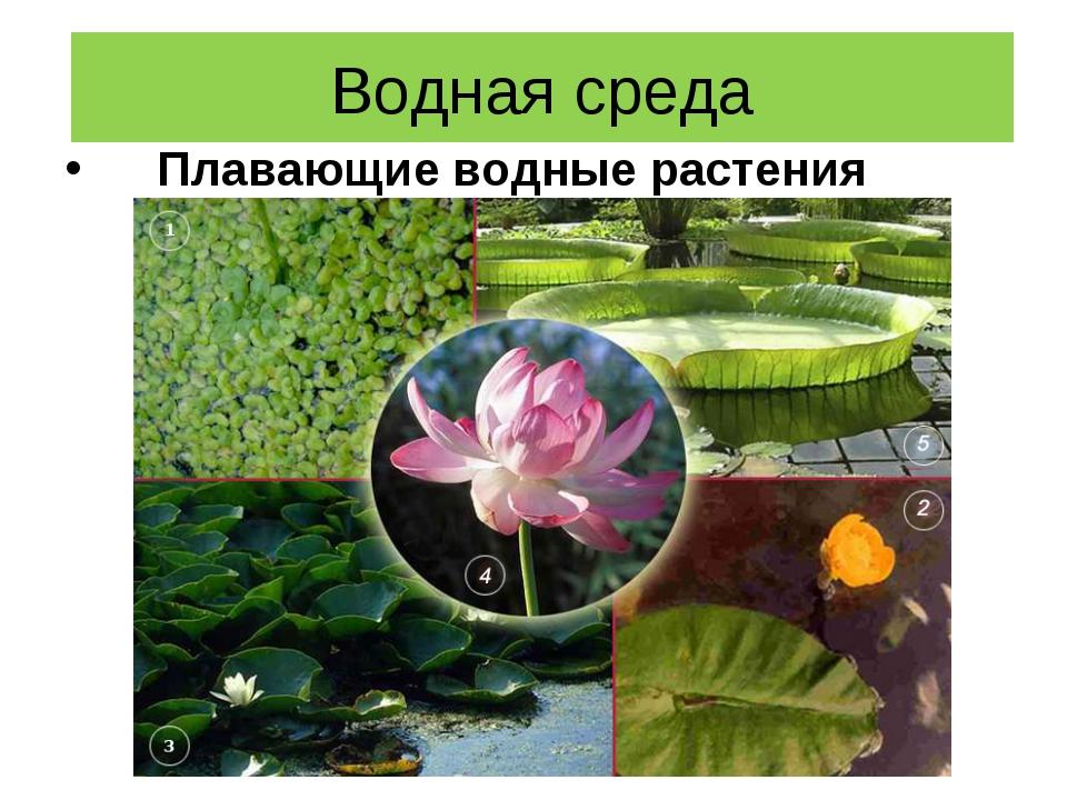 Водная среда Плавающие водные растения