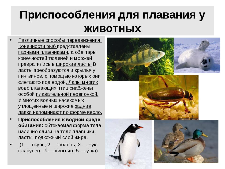 Приспособления для плавания у животных Различные способы передвижения. Конечн...