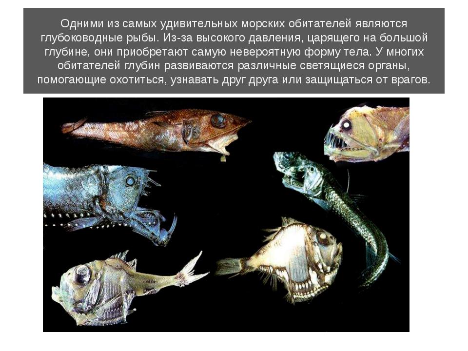 Одними из самых удивительных морских обитателей являются глубоководные рыбы....