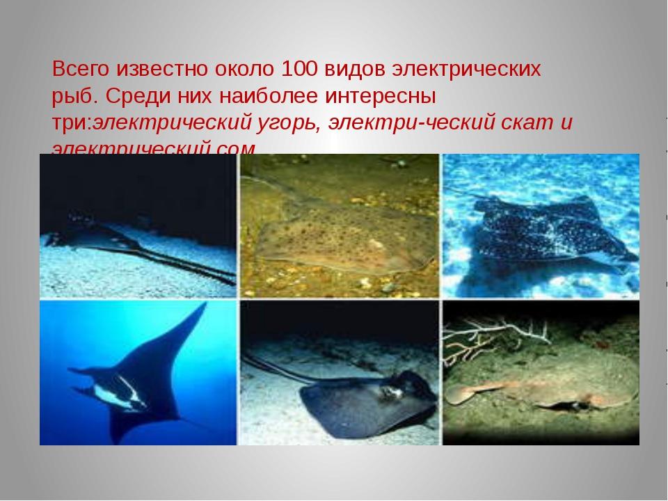 Всего известно около 100 видов электрических рыб. Среди них наиболее интересн...