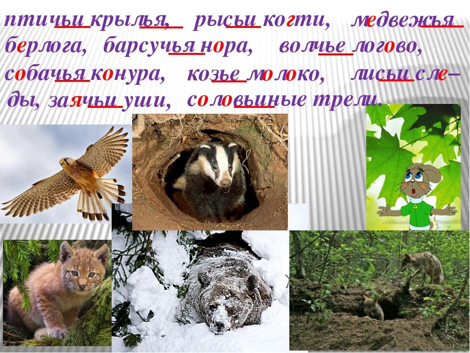 птичьи крылья, рысьи когти, медвежья берлога, барсучья нора, волчье логово, с...