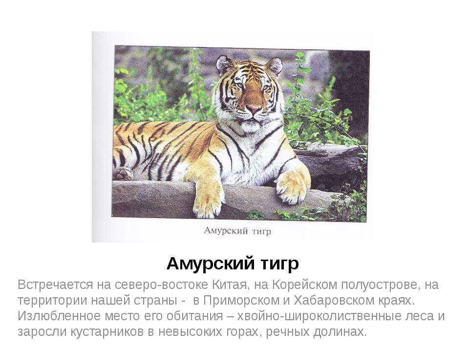 Амурский тигр Встречается на северо-востоке Китая, на Корейском полуострове,...