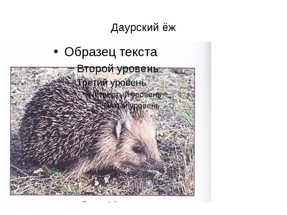 Даурский ёж
