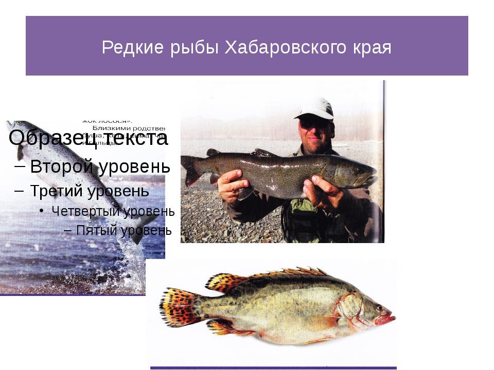 Редкие рыбы Хабаровского края
